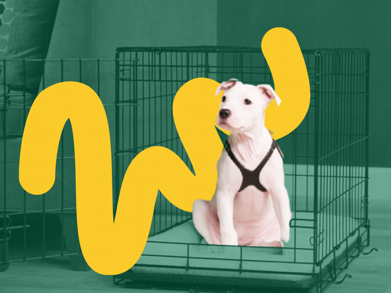 Teaching a Puppy to go Inside Crate Training