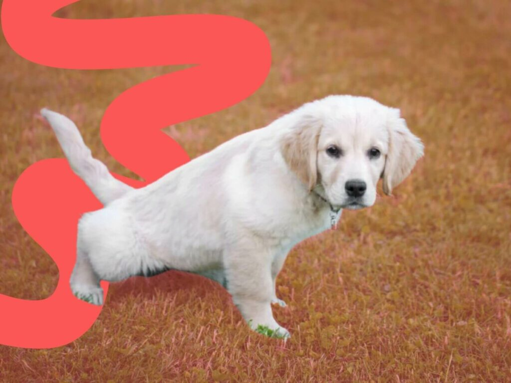 Weekly Overview of When To Start Training Your Puppy Anything