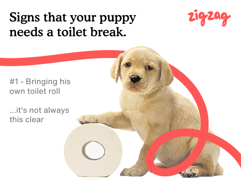 funny signs that a puppy needs a toilet break house training