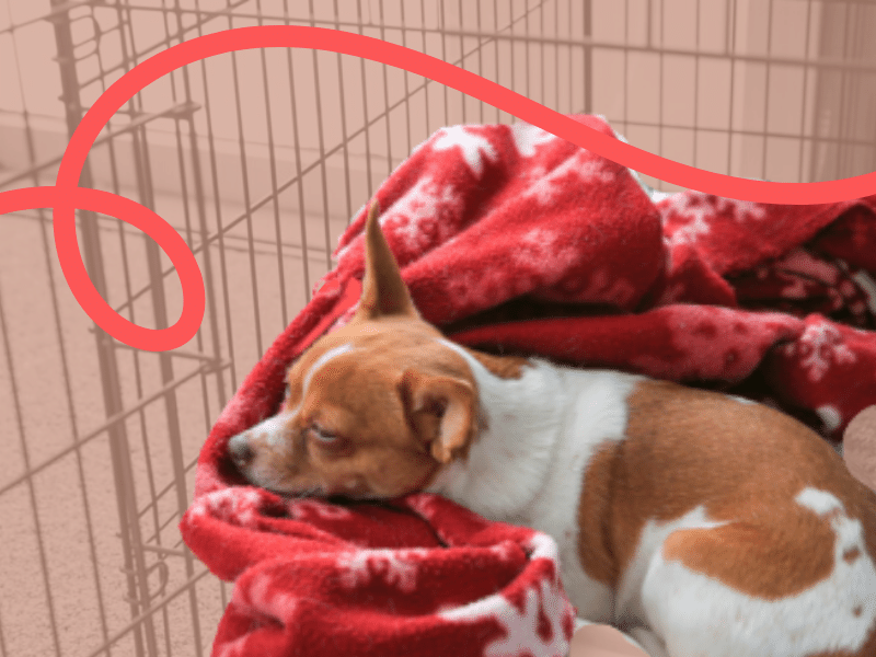 Sleeping Puppy Crate Training at Night