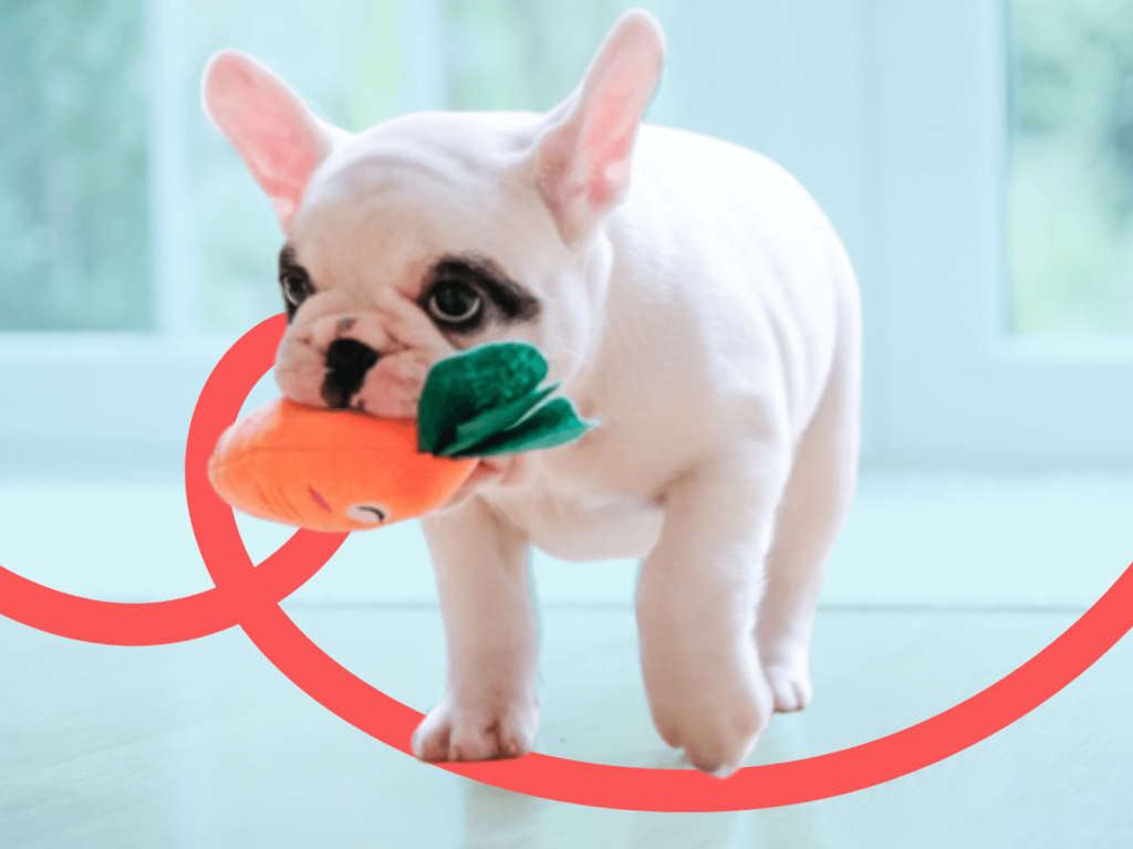 50+ Tips for New Puppy Owners