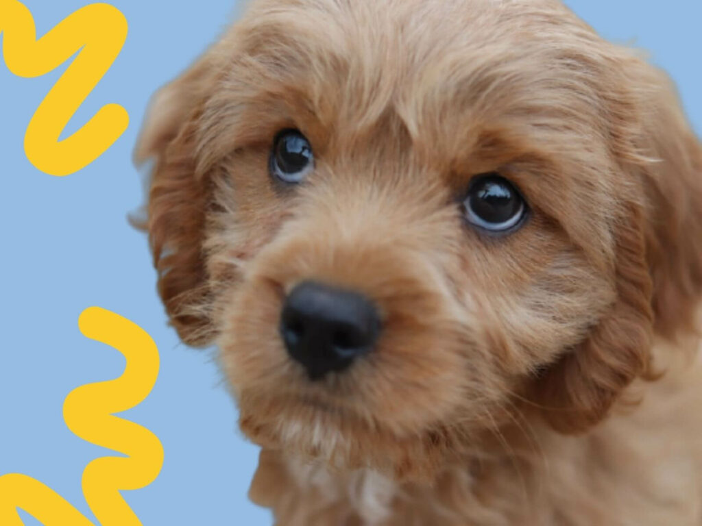 How often should you worm a puppy?