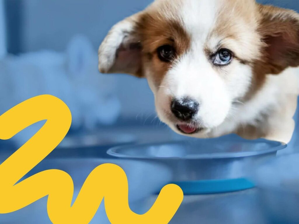 Puppy Nutrition: What makes up a high-quality puppy diet?