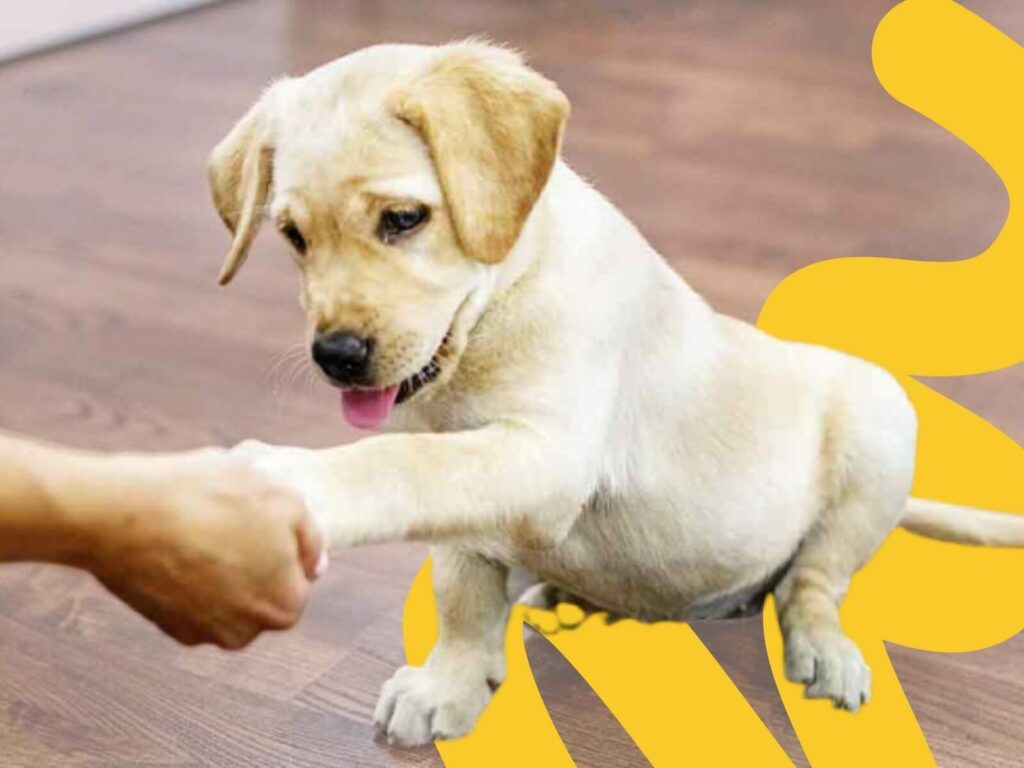 The 2021 Best Places for Online Puppy Training