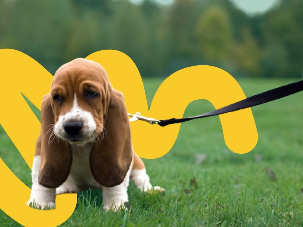 Step-by-Step How to Lead Train Your New Puppy